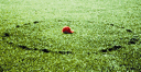 image of fairy ring