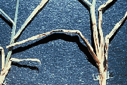 magnified image of leaf spot